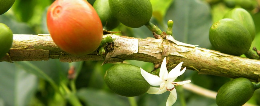 coffee-mill-bean-and-flower