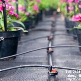 Que tưới nhỏ giọt tưới cây trồng trong chậu