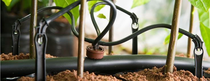 Tưới nhỏ giọt cho cây trồng trong chậu