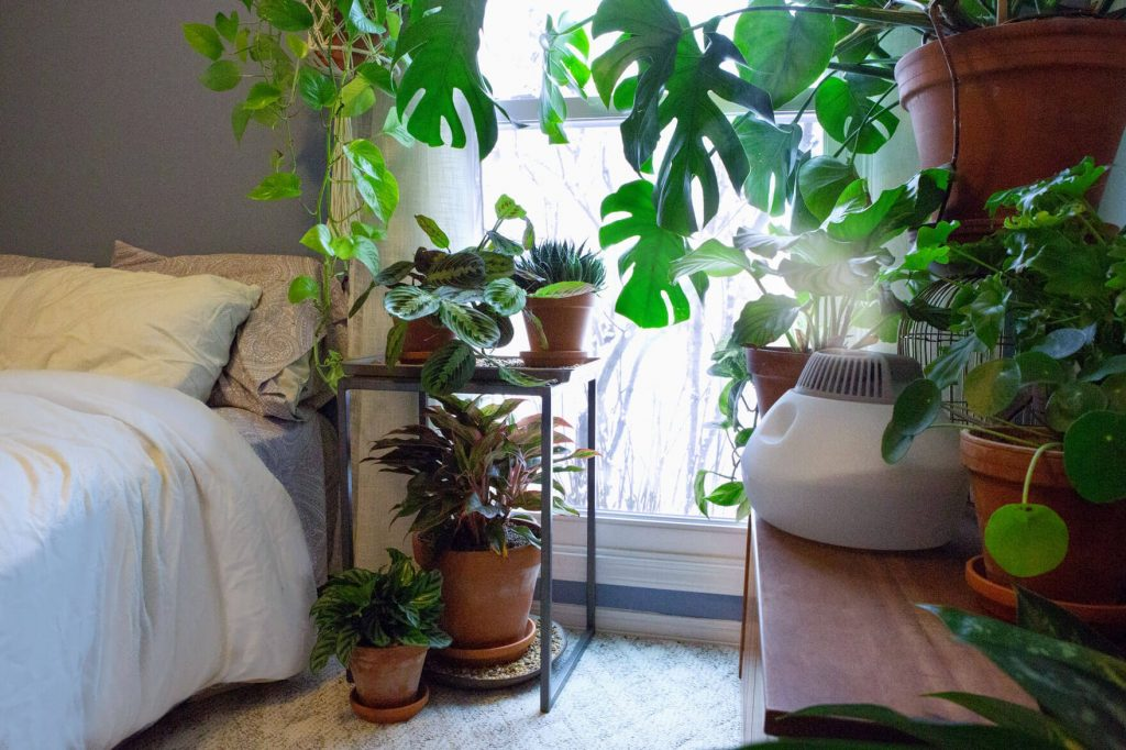 Tăng cường độ ẩm cho cây trồng trong nhà